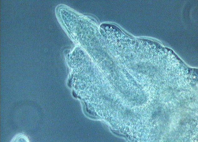 haben bakterien einen zellkern