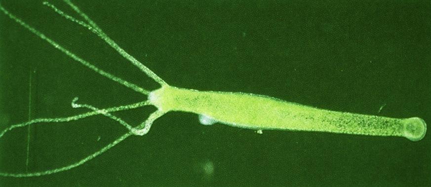 geschlechtliche vermehrung bei algen